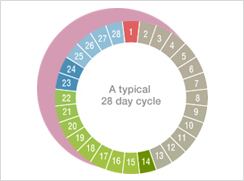 3.How long is a menstruation cycle?